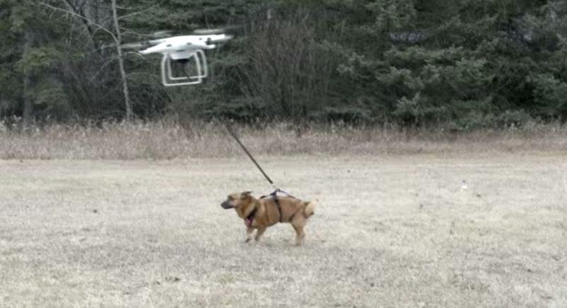best viral drone videos